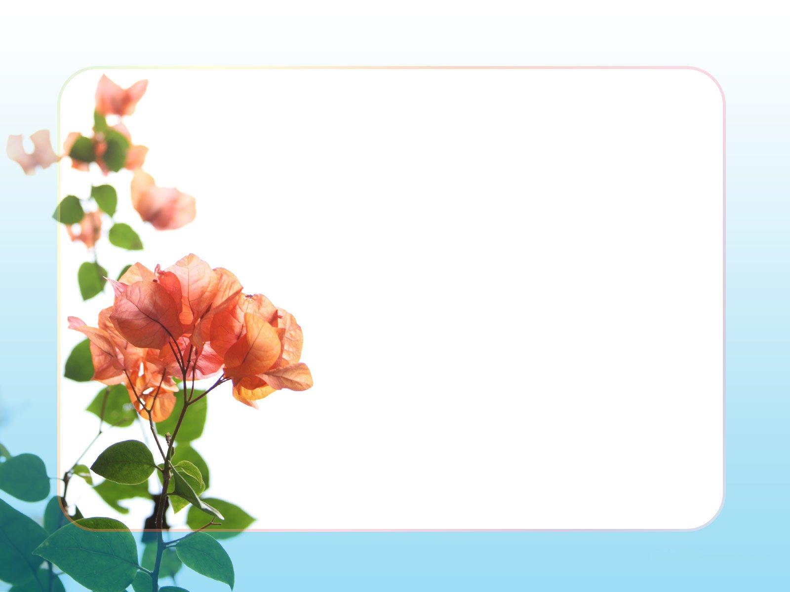 Hình nền Powerpoint màu trắng dễ thương