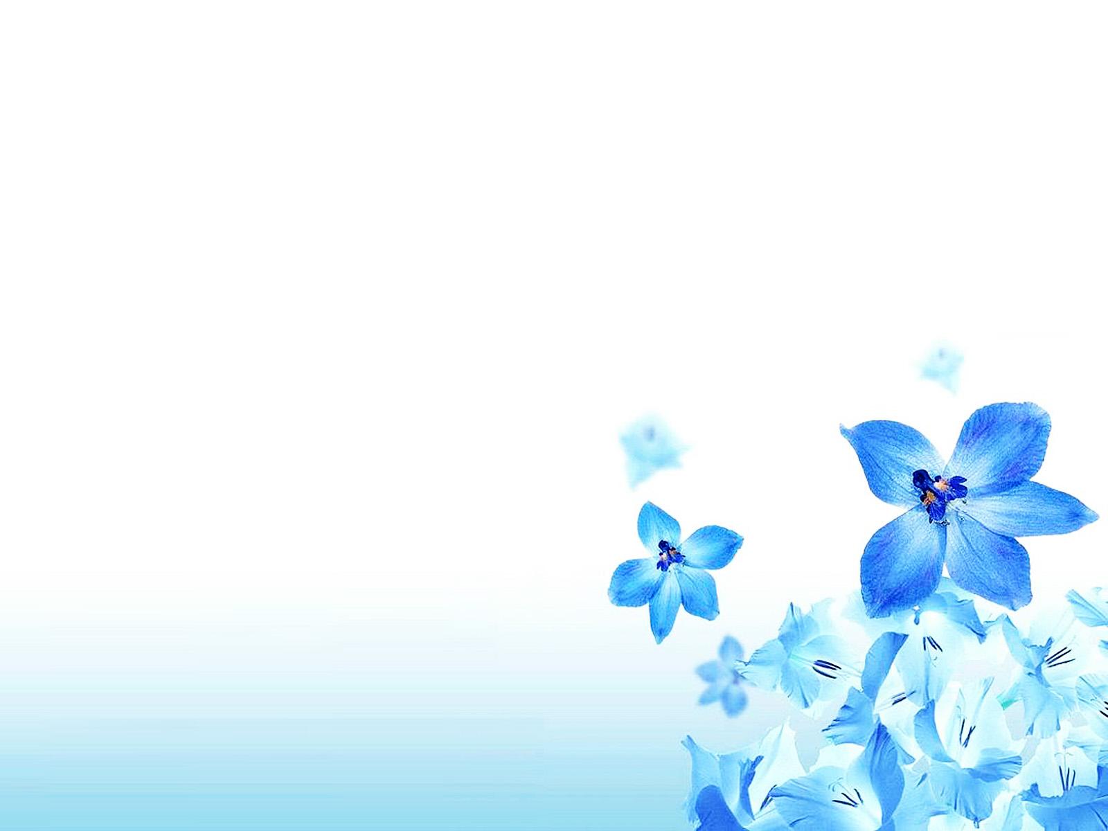 Hình nền đẹp cho PowerPoint với những đóa hoa lan